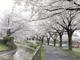 見沼通船堀(緑区)
