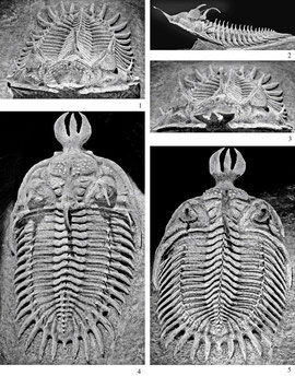Fuente: Imágenes google. http://jpaleontol.geoscienceworld.org