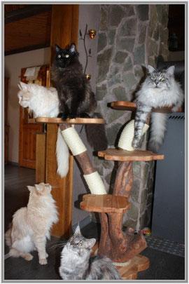 Maine Coon Kratzbaum von Magiccats