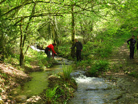 il faut découvrir cascades et forêt, les joies de la nature ,en  VTT ou en randonnée