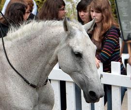 Jardineira, Equestria 2011