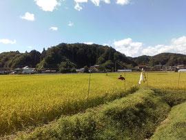 花輪の田園風景(昨年夏)