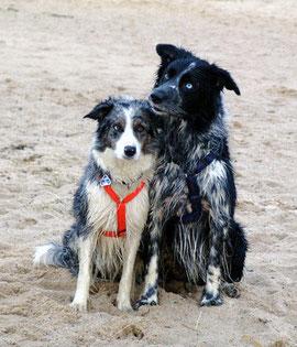 Cheeky und Gus