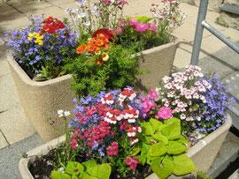 Balkonkästen Bepflanzung