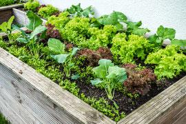 Hochbeete mit Duft- und Gewürzpflanzen