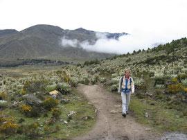 In the Venezuelan Andes