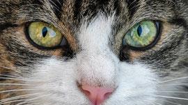 Tierbetreuung vor Ort, Katzenbetreuung durch ausgesuchte Katzensitter. Keine Tierpension, keine Katzenpension