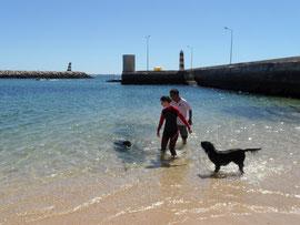 Rodrigo beim Wasserhundtraining