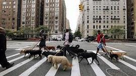Paseadores hacia Park Avenue.