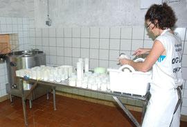 Préparation des lactiques