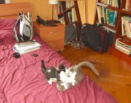 Thelma (en gris) et Louise (noiraude)