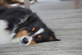 Yukon träumt schon mal von einem entspannten Frauchen