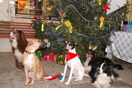 Die Weihnachtsdogs