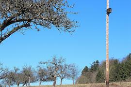 Turmfalkenkasten an Holzstrommast (Foto. W. Jost)