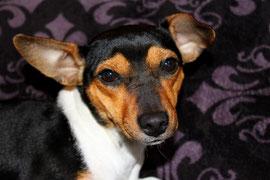 Nelly mit ihren Gismo-Ohren. :-)