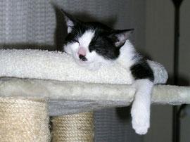 Katzen in Wohnungshaltung