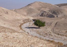 HIGH ABOVE THE WADI QILT  NEAR JERUSALEM