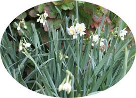 今年は寒いせいか、例年になく開花が遅い