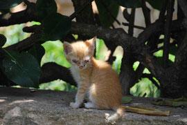 Krankes Kätzchen