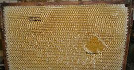 scheinbar völlig unreifer Honig