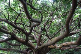 屋久島 自然