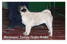 Маленрос Тутси Пифа-Фифа- 5 мес.