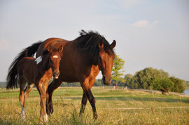 Willow Whisp and foal