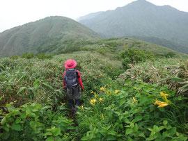 ニッコウキスゲとササユリの稜線を行く。遠くに経ケ岳