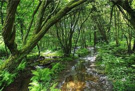 Le Val sans Retour, forêt de Paimpont, Bretagne