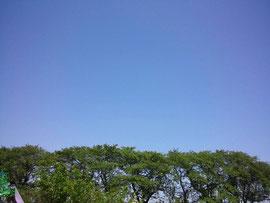 川沿いの公園  2014/05/11