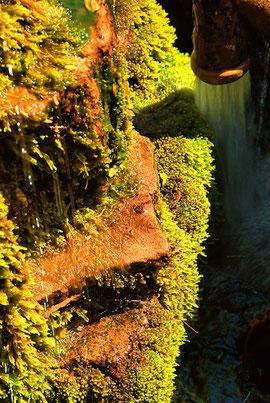 Ein Brunnen mit Gesicht