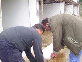 Tessa e.V.,Fairplay im Tierschutz,Tierschutz, Izmir, Foca, Türkei, Nilgün Karsilayan, Tierfreunde Izmir / Türkei /  Foça - Tierheim