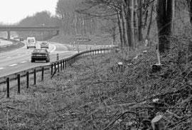 Verkehrsschutzmaßnahme oder ökologischer GAU? Auf der A 44 bei Alsdorf-Hoengen wurden wie überall in Nordrhein-Westfalen Bäume entlang der Autobahnen gefällt. Diesmal allerdings an einigen Stellen in NRW viel zu viele, beklagen die Naturschützer des Nabu.