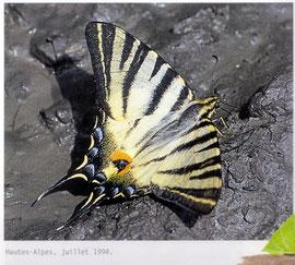 magnifique ce papillon !