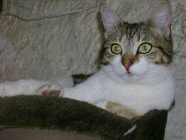 Gipsy, 3 ans