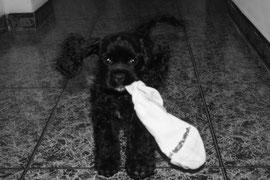 On peut très bien s'amuser avec une vieille chaussette, photo F.O
