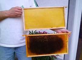Während bebrütete Altwaben (unten) eingeschmolzen werden, können ausgebaute Leerwaben (oben) im Bienenvolk verbleiben