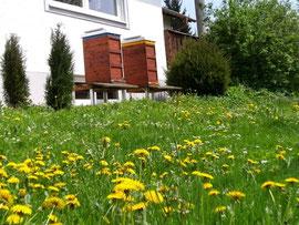Frühling am Bienenstand