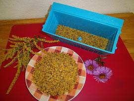 Nach der Ernte wird der Höselpollen getrocknet, da er sonst aufgrund seines hohen Wassergehaltes schnell verderben würde