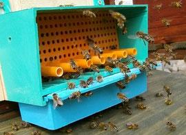 Pollenfalle im Einsatz. Die Ernte darf nur bei schönem Wetter erfolgen, da hohe Feuchtigkeit dem Pollen schadet.