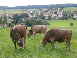 Blick vom Schloßberg auf Scherstetten