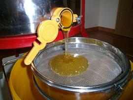 Frisch geschleuderter Honig wird gesiebt, bevor er in den Abfüllbehälter gelangt.