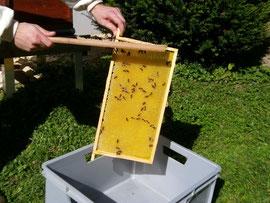 Die entnommenen und überschüssigen Leerwaben dienen im folgendem Frühjahr zur Bestückung des Honigraums. Sie werden trocken und luftig über den Winter eingelagert.