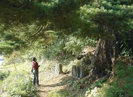 大竹秀蔵の遺骨が眠るこの地をついに発見した筆者