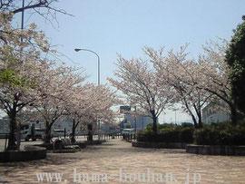道の駅富士の桜