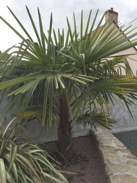 Palmier dans un parterre