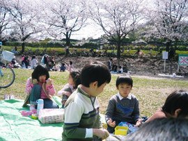 山崎公園で花見