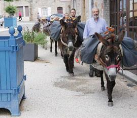 sur le chemin de saint-jacques avec les ânes de vassivière