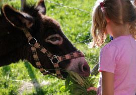 vacances de pâques en limousin : balades avec les ânes