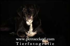 Foto Fotoshooting Hundefoto Hundefotografie kostenlos Dalmatiner Welpe